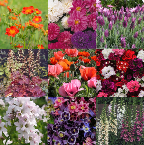 Bee/Pollinator/Wildlife Friendly Perennial Flower Collection (C1)