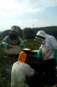 Beekeepers working on a hive